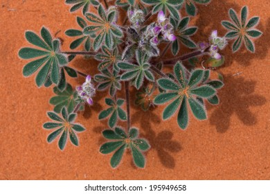 Beautiful desert flower with a sandy back drop