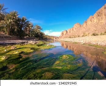 Beautiful Desert oasis landscape in Oasis De Fint near Ourzazate in Morocco, North Africa