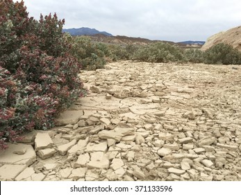 Beautiful desert plants and mountains in Death Valley California