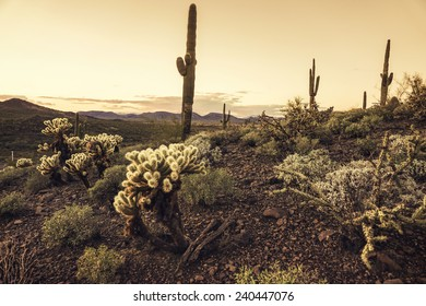 Beautiful desert scene at dusk in Phoenix, Arizona,USA