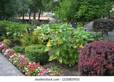 Beautiful design of flower beds with curb flowers and a yellow Indian fur.