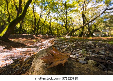 beautiful detail of a leaf in a stone into the forest, Krinofyta, Kalavryta, Greece