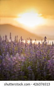 Beautiful detail of perfect purple flowers in sunset