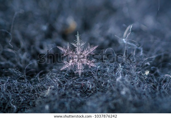 Beautiful detail of a snowflake, a single ice crystal in Paris winter, falls through the Earth's atmosphere as snow. Shining hexagonal crystals shape, used as a symbol of snow or crystal in science