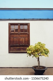 Beautiful detail of a typical facade of a small house with window and a plant in Garachico, Tenerife, Canary Island