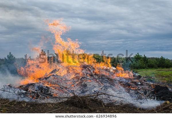 Beautiful detailed bonfire in natural area