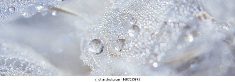Beautiful dew drops on a dandelion seed macro. Beautiful soft blue background. Water drops on a parachutes dandelion. Copy space. soft focus on water droplets. circular shape, abstract background.