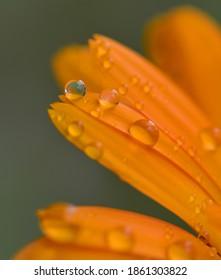 Beautiful dewdrop on a petal
