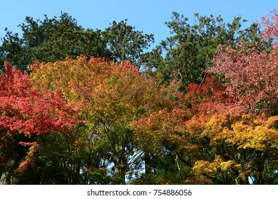 Beautiful different colors of Autumn trees in Koyasan's central temple complex, Wakayama, Japan