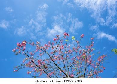 Beautiful different kapok under the blue sky