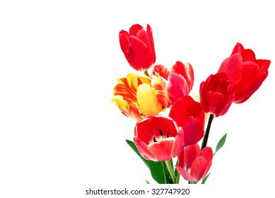 Beautiful different tulips isolated on white background