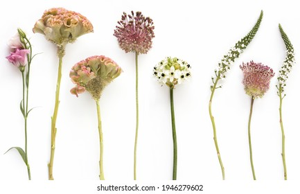 beautiful different types of single flowers in soft colors, on white background