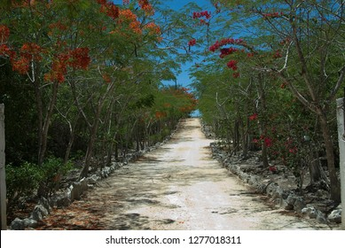 Beautiful Dirt Road in Mexico with Flamboyant trees