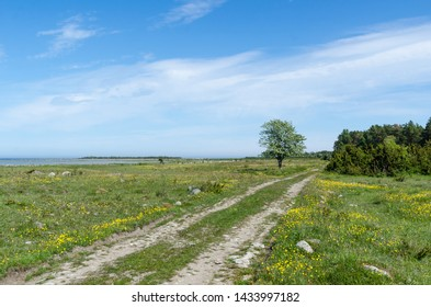 Beautiful dirt road through a green grassland with lots of yellow flowers in a nature reserve by the coast of the Baltic Sea at the swedish island Oland