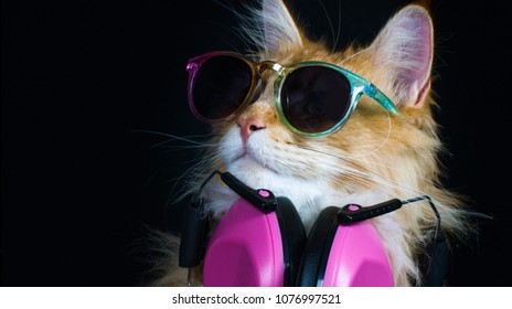 beautiful disco cat wearing headphones and sunglasses, looking at the camera with abstract colour overlays