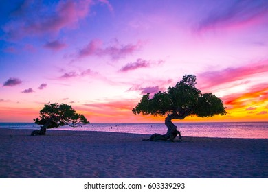 Beautiful divi divi trees at sunset on beach in Aruba