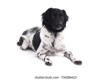 Beautiful dog