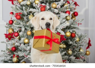 beautiful dog holding a gift box in mouth by the ribbon for Christmas