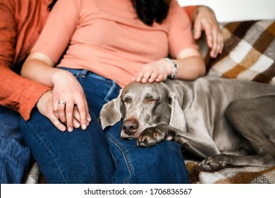 A beautiful dog lies on his mistress's feet