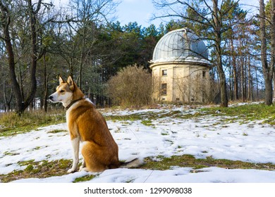 The beautiful dog and the old telescope. The Crimean astrophysical observatory
