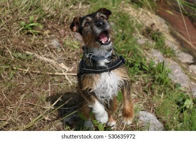 Beautiful Dog on the green Field
