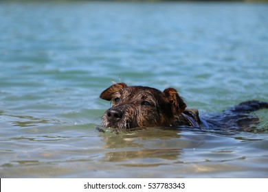 Beautiful dog playing and swimming in the sea
