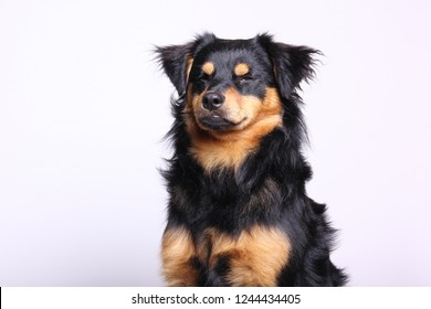 Beautiful dog posing