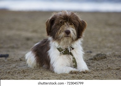 beautiful dog with a sad face lying on the beach