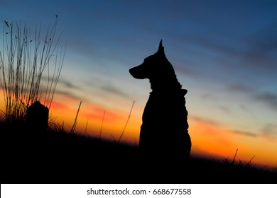 Beautiful dog at the sunrise with blue and orange background silhouette