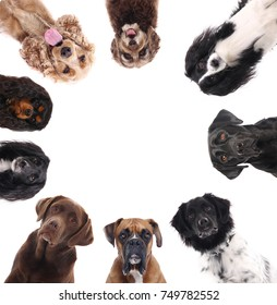 Beautiful dogs