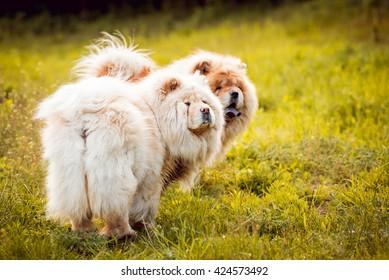 Similar Images, Stock Photos & Vectors of Beautiful Dog