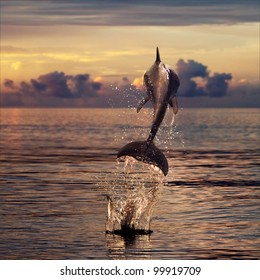 beautiful dolphin jumped from sunset sea