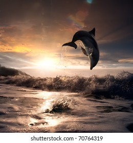 beautiful dolphin jumped from water at the sunset time