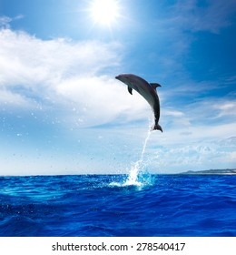 Beautiful dolphin leaping from Blue Ocean