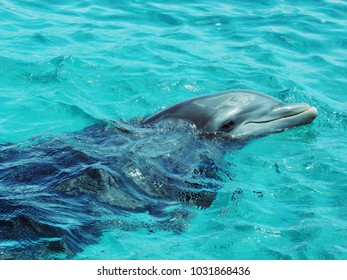 A beautiful dolphing with head outside water