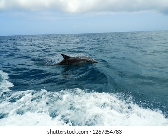 Beautiful Dolphins in the Caribbean Sea, Los Roques, Venezuela. Great animal's scenery. Dolphins in nature. Beautiful landscape. Wild life scenery. Animal's scenery.