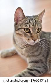 Hermoso retrato doméstico de gatos cerca