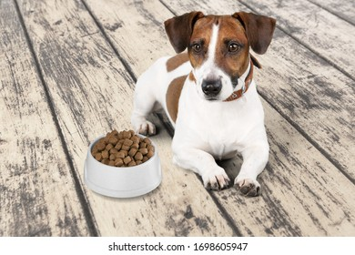 Beautiful domestic dog on the floor with food in the bowl