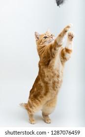 cat positions images stock photos  vectors  shutterstock