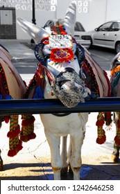 Beautiful Donkey in Mijas