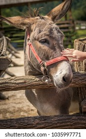 Beautiful donkey in various positions