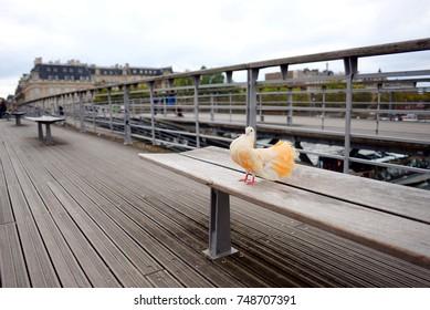 Beautiful dove on the bridge over Seine, Paris