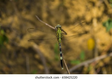 Beautiful Dragonfly on a sticks