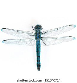 Beautiful dragonfly on white background.