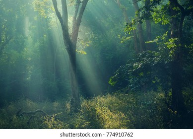 Beautiful dreamy dark forest in foggy morning hues