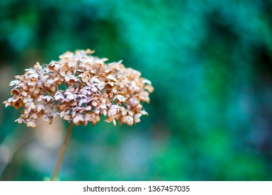 Beautiful dried flower. Close-up with blurred background.