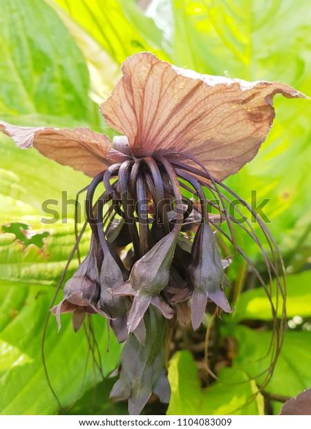 Beautiful of dried flowers in Khoa yai national park Thailand