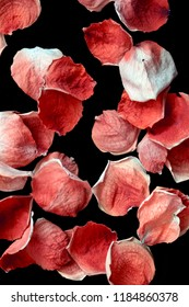 Beautiful Dried Red Pink Rose and Petals on Black Background