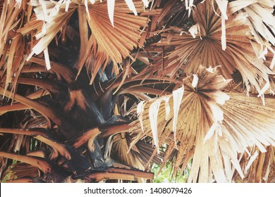 Beautiful of dried tropical leaves