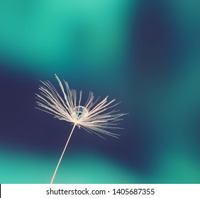 Beautiful drop of water on a dandelion seed on a blurred background, reflection of a flower in a drop, macro.